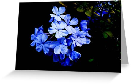 Beguiling Blue! by Rosemary Sobiera