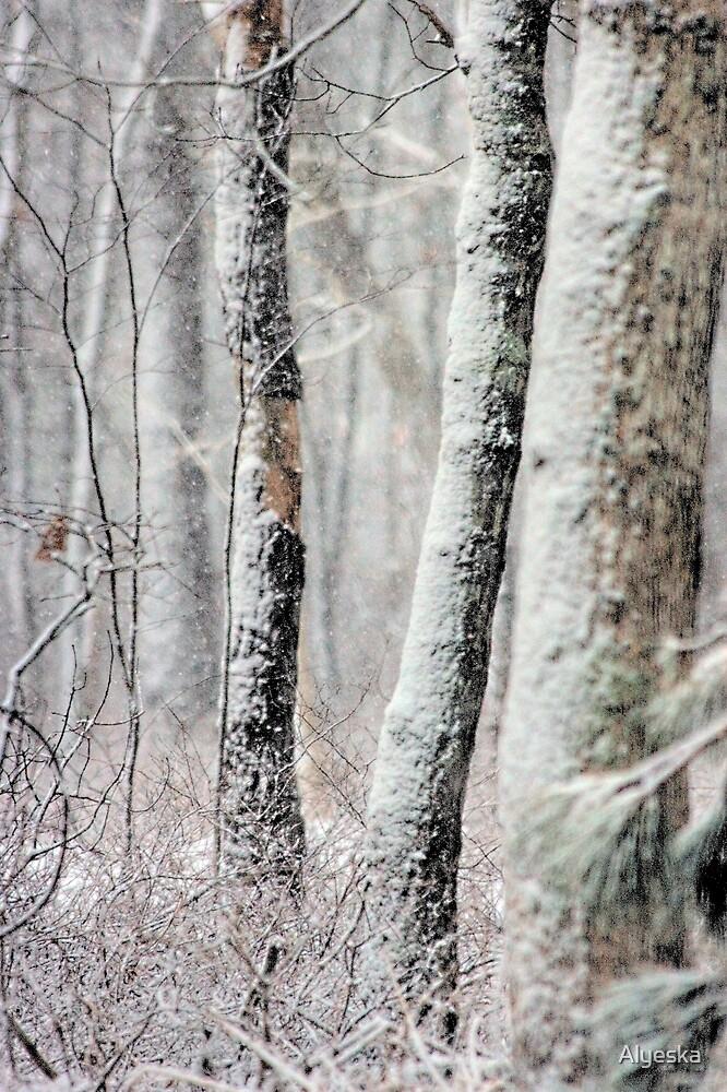 Snowy Woods by Alyeska