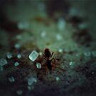 Sweet like Ants by Lisa Brower