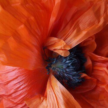 Open Poppy by Jing3011