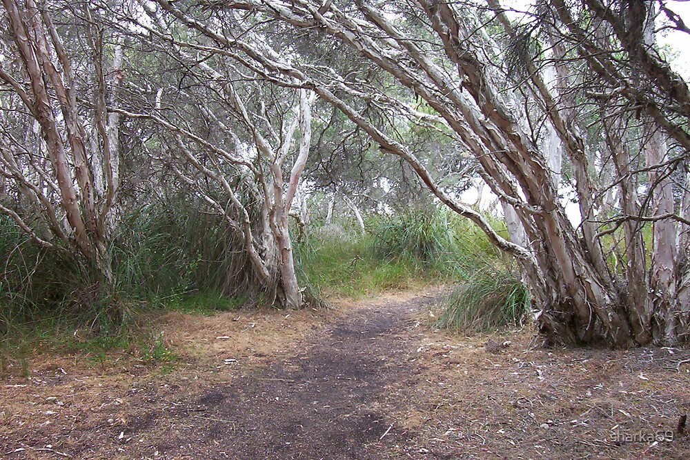 Silver path by sharka69