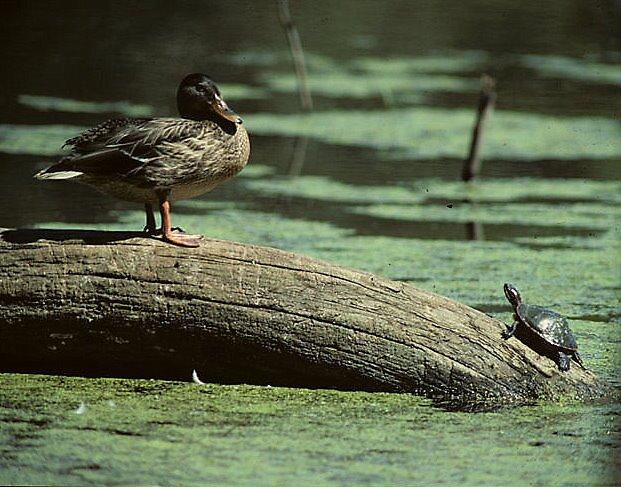 get off my log ! by bertspix