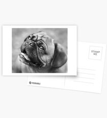 The Look Of Love Postcards