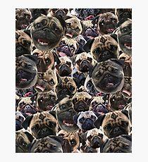 Pugs, not drugs Photographic Print