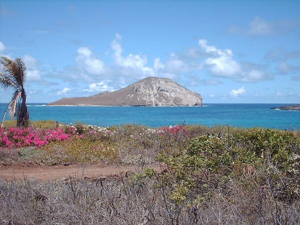 Oahu by Cheeseya024