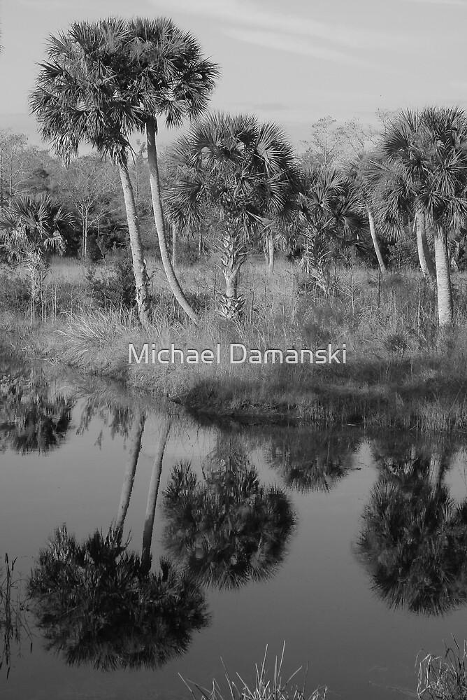 Old South Florida Palms by Michael Damanski
