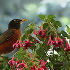 Friendly Robin Redbreast by Rosemary Sobiera