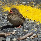 Other side Hedge Sparrow chick by landromeda