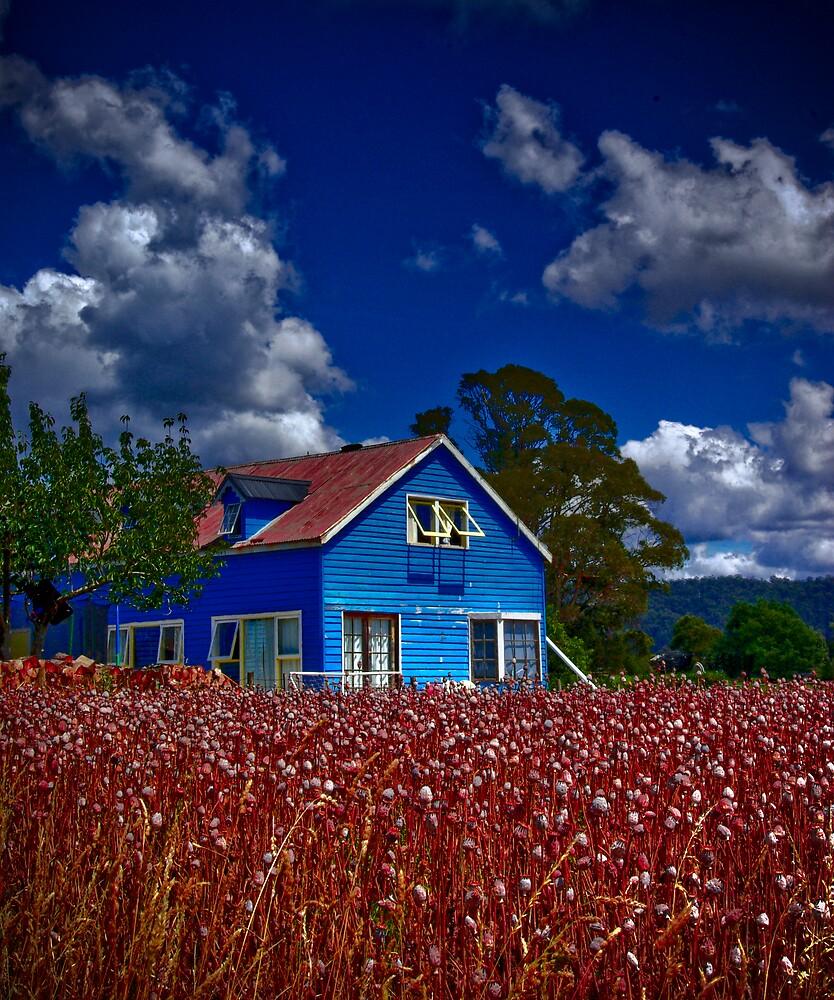 Beyond Blue by Rhana Griffin