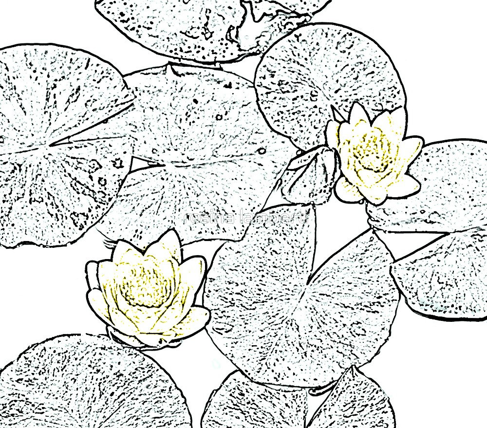 Water lily by Rosina  Lamberti