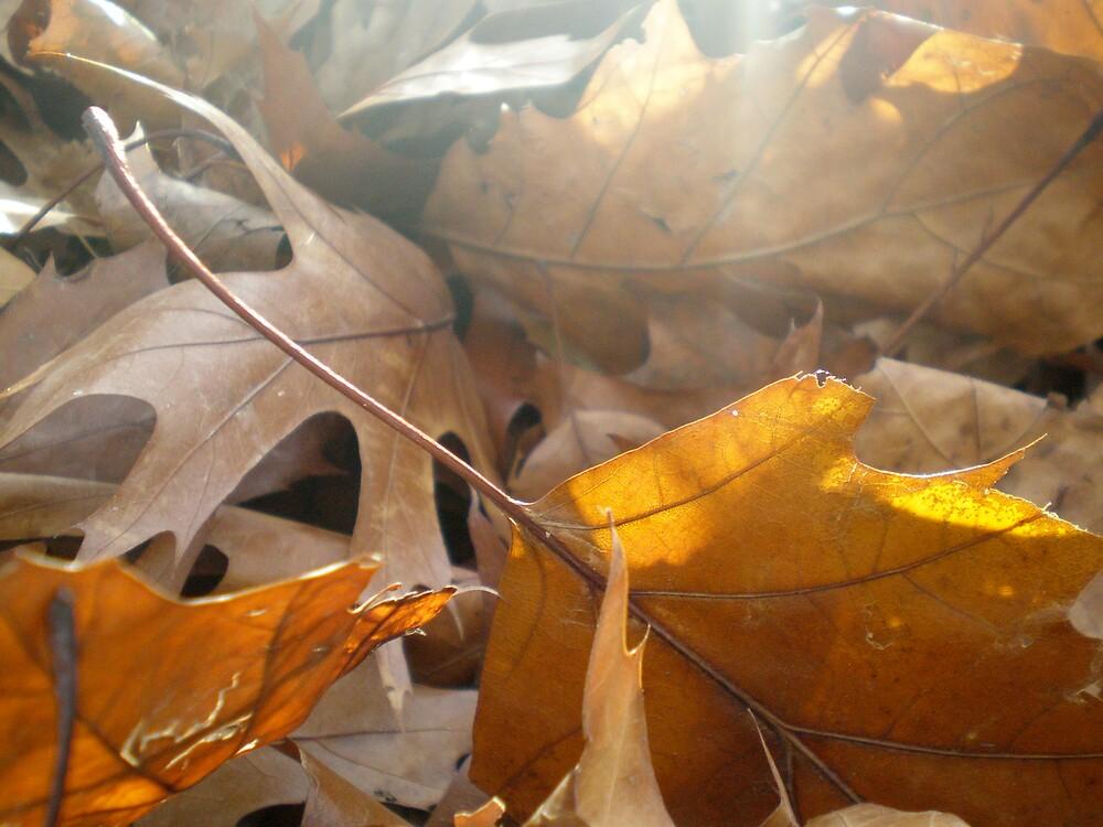 Orange gleam by pbeltz