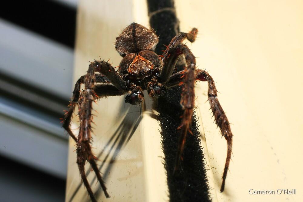 Spider: Close up by Cameron O'Neill