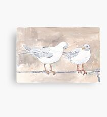 Seagulls at Durban Harbour, South Africa Canvas Print