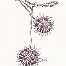 Olieboom (Thorn apple) - Botanical illustration by Maree Clarkson