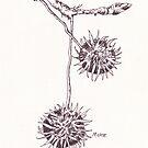 Olieboom (Dornapfel) - botanische Illustration von Maree Clarkson