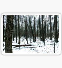 Winter Forest - Birchwood, WI Sticker