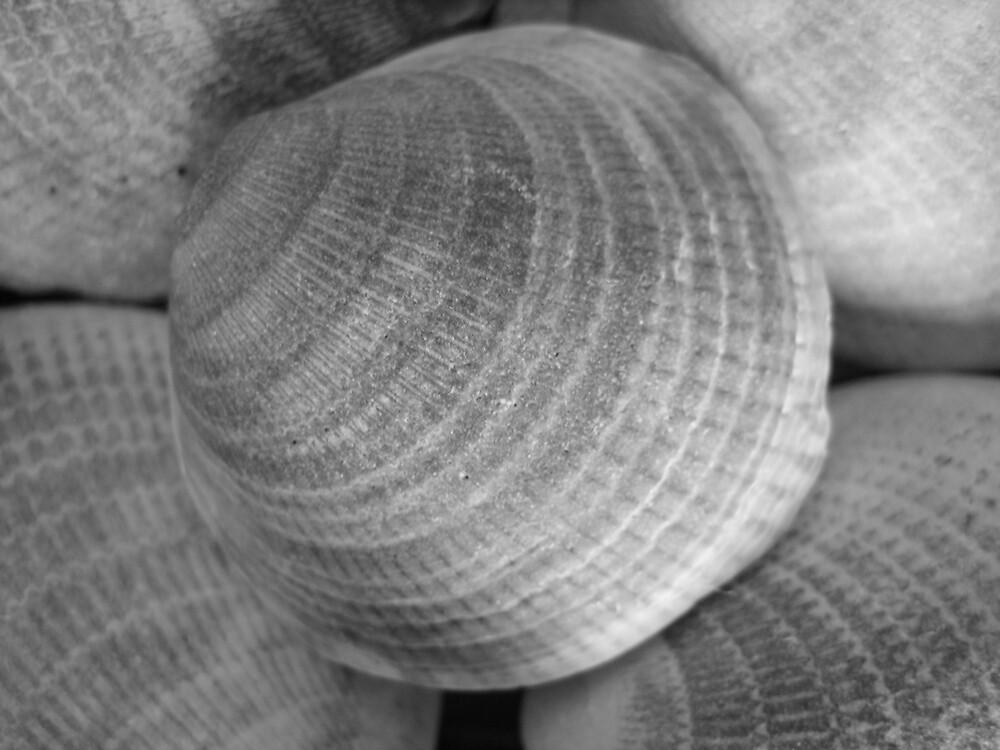 Simple Shells by JoandBen