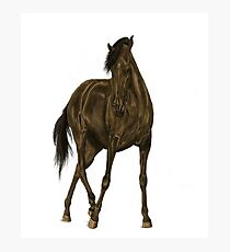 Horse Design Photographic Print
