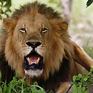 KING OF THE JUNGLE by Larry Glick