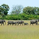ELEPHANT FAMILY by Larry Glick