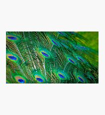 Peacock Mystery Photographic Print