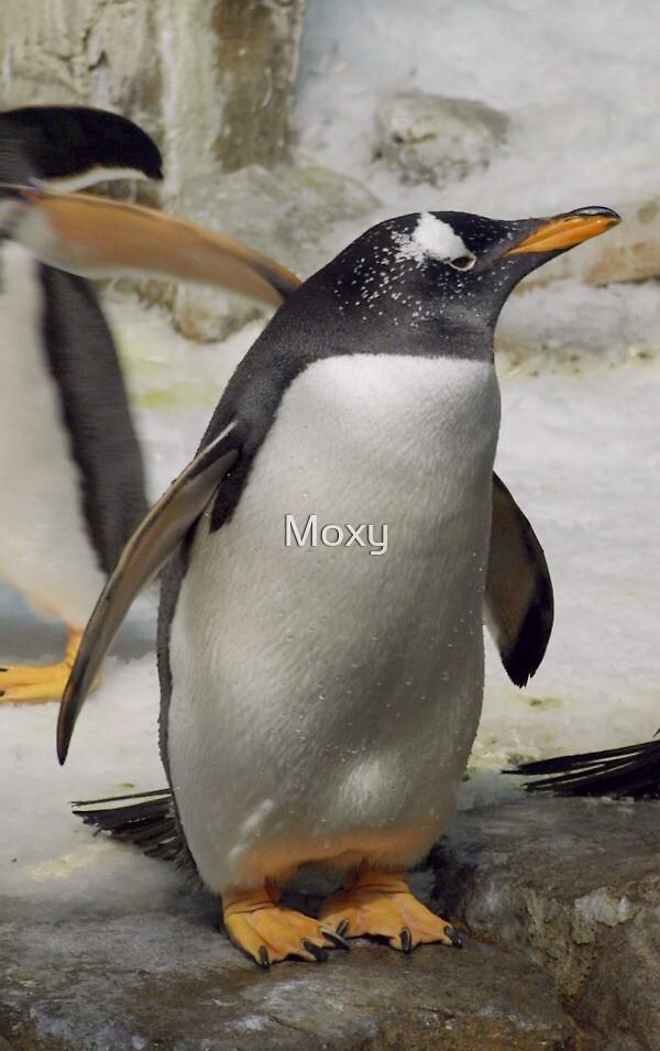 Penguin by Moxy