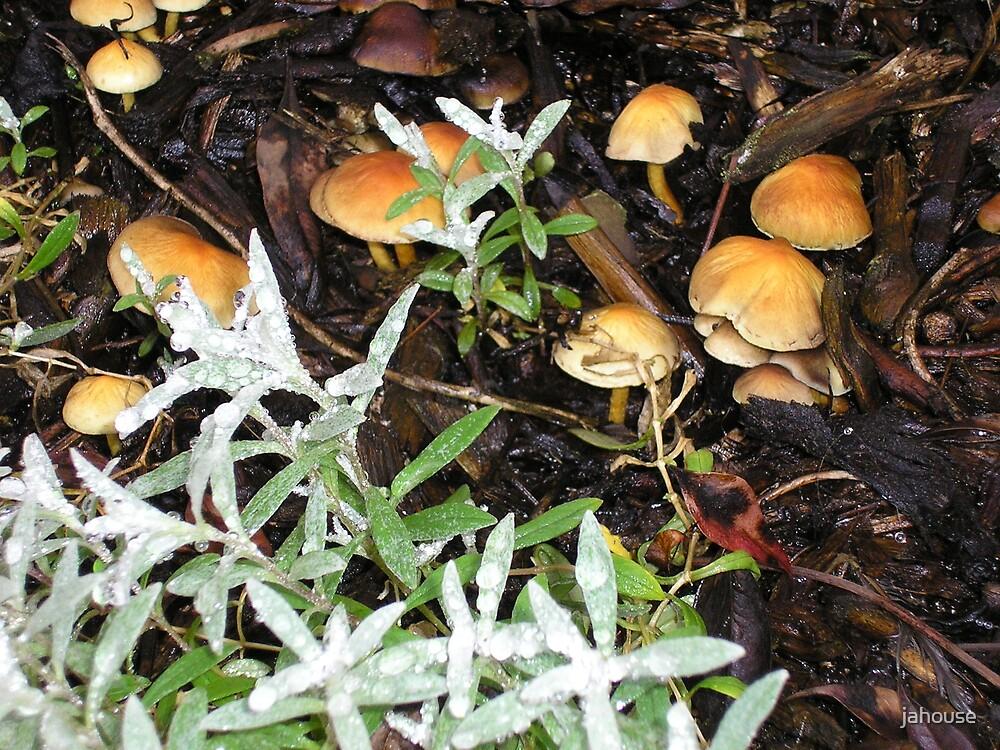 Musky Mushrooms by jahouse