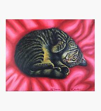 Gigi Cat Curl on a Red Rug  Photographic Print