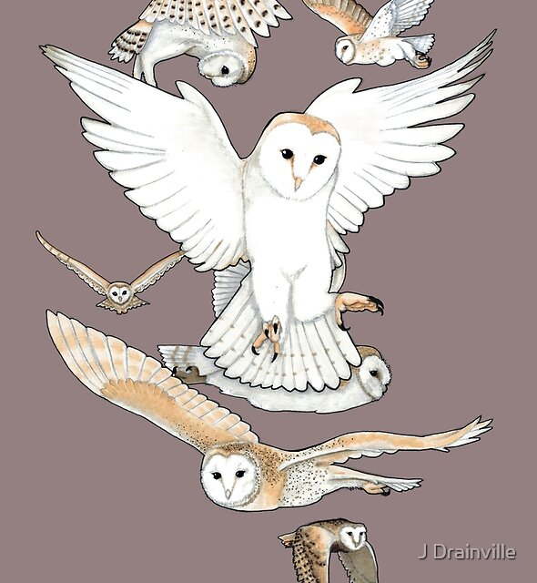 A Parliament of Owls by Jacquelyne Drainville