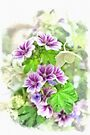 Tall Mallow - watercolour by PhotosByHealy