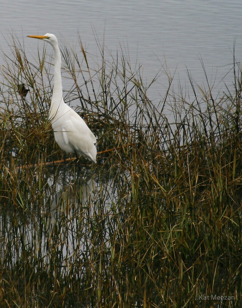 Egret in the morning by Kat Meezan