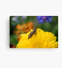 Grasshopper's Point of View Canvas Print