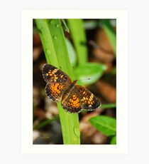 Little Pearl Crescent Butterfly on Leaf Art Print