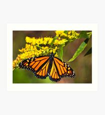 Monarch Butterfly and Flower Art Print