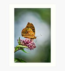 Fritillary Butterfly on Flower Art Print