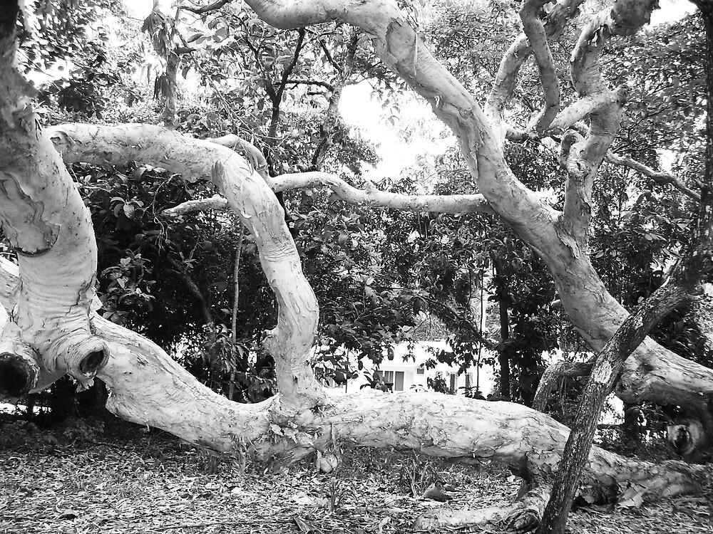 reaching branch by xXDarkAngelXx