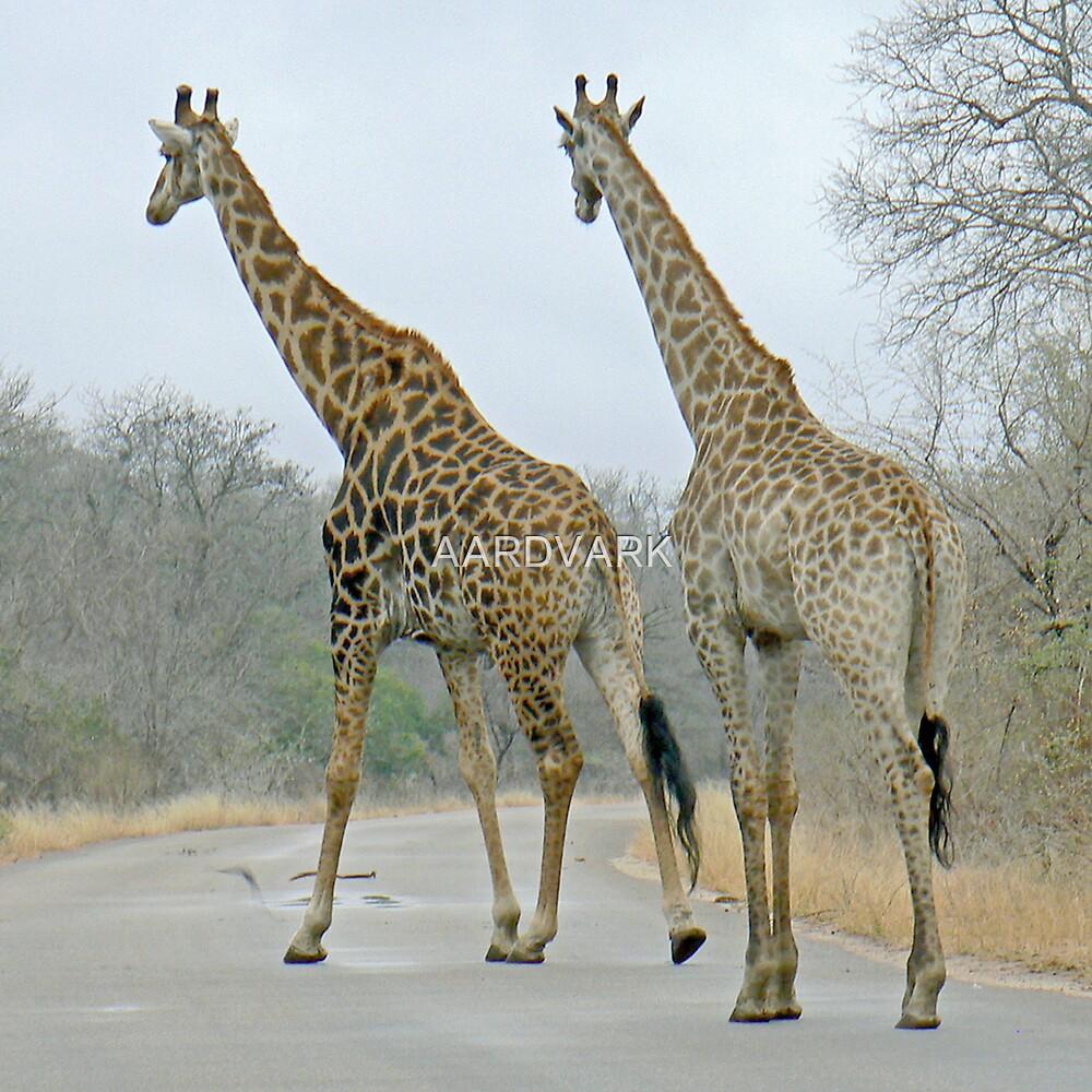 Giraffes Crossing by AARDVARK