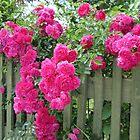 Over The Garden Fence by lezvee