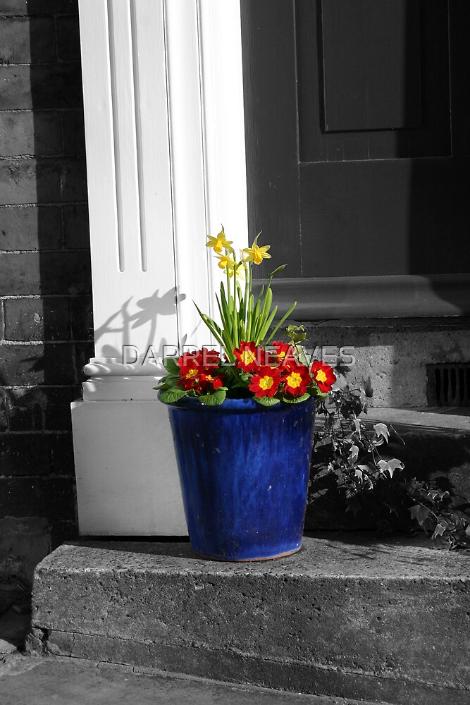 THE FLOWER POT by DARREL NEAVES