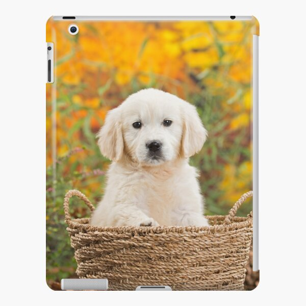 Cute Golden Retriever puppy in basket iPad Snap Case