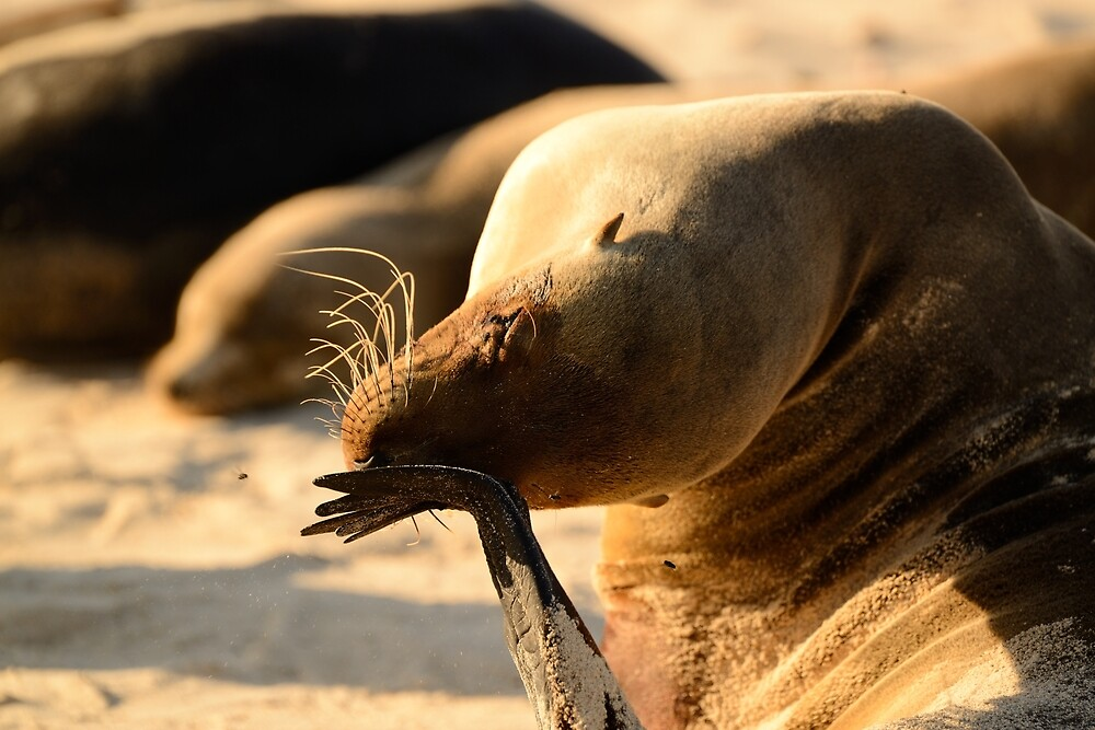 Sea Lion face palm by Derek McMorrine