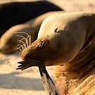 Sea Lion face palm by Derek McMorrine