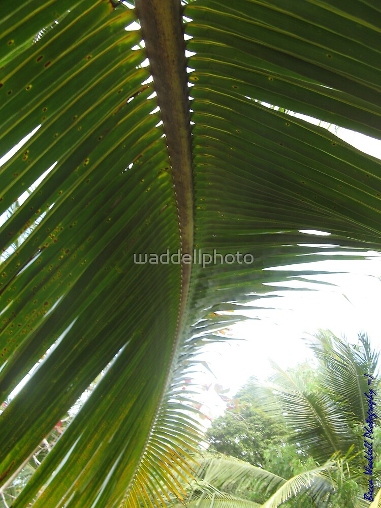 Lines on Palms by waddellphoto