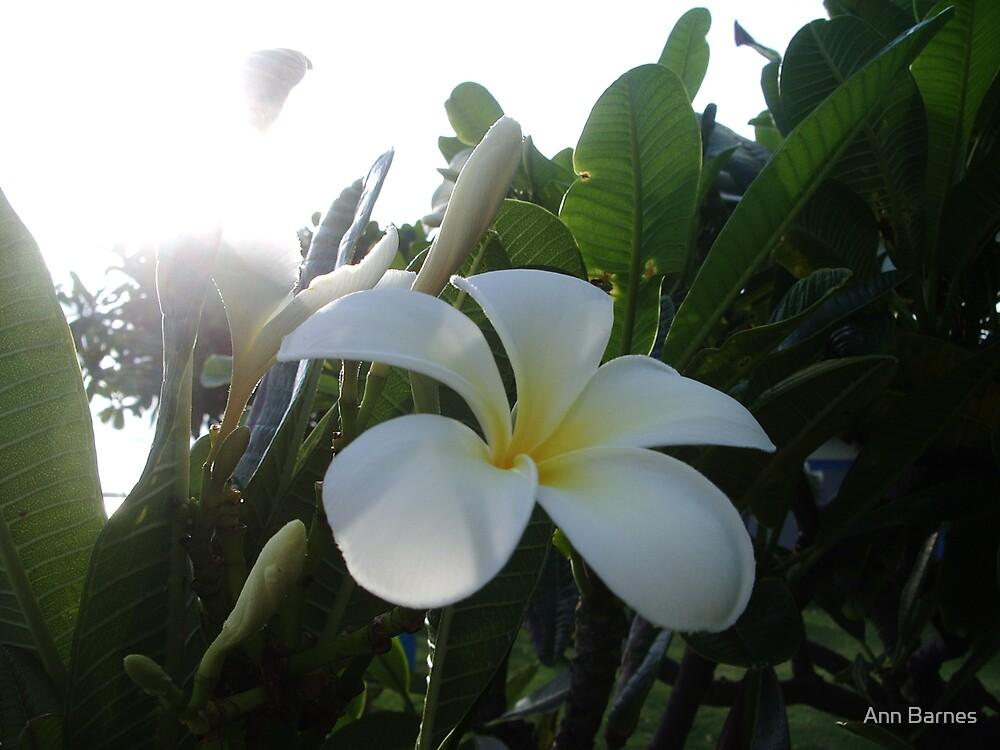 Flower by Ann Barnes