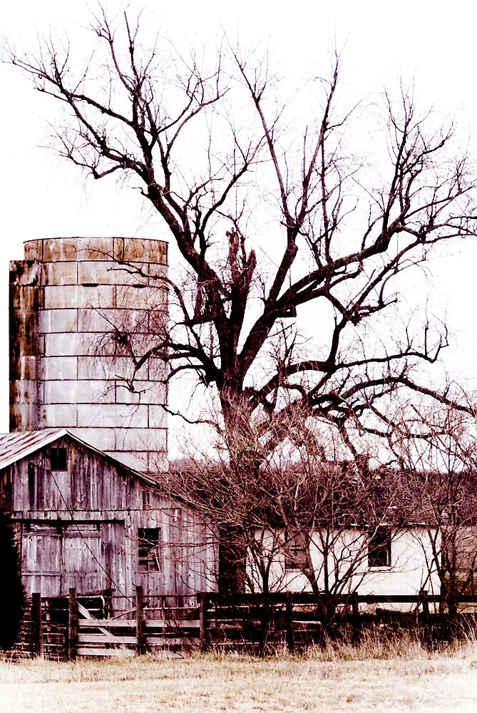 The Tree by Rod  Adams