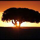 On African Soil by Chris Coetzee