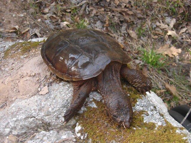 dead turtle by soldierswifey07