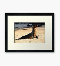 Wet sea lion Framed Print