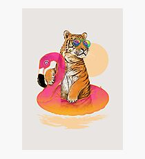 Chillin, Flamingo Tiger Photographic Print