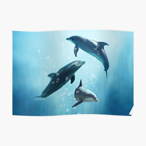 Dolphins in the Sea Poster